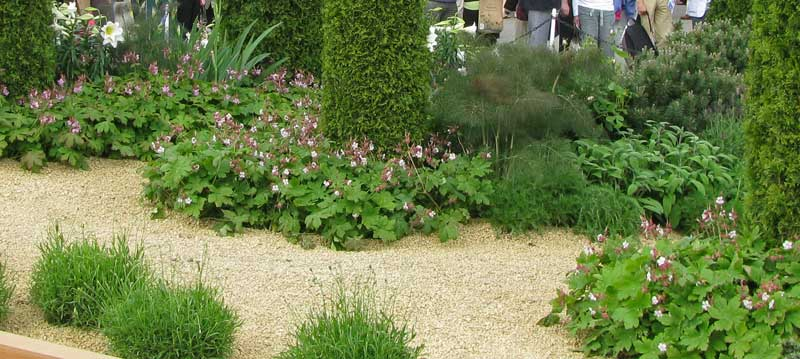 geranium macrorrhizum balkan storchschnabel. Black Bedroom Furniture Sets. Home Design Ideas