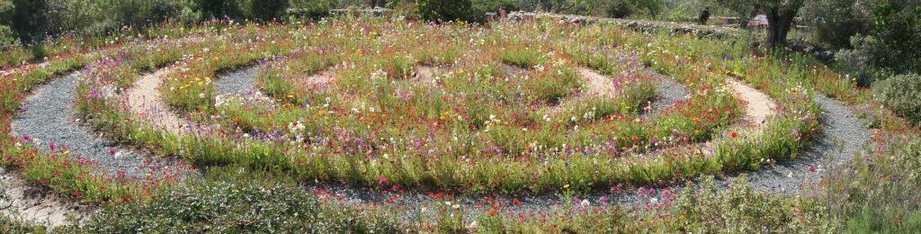 Mdr Mein Garten Wildapfelprojekt Gr Ne