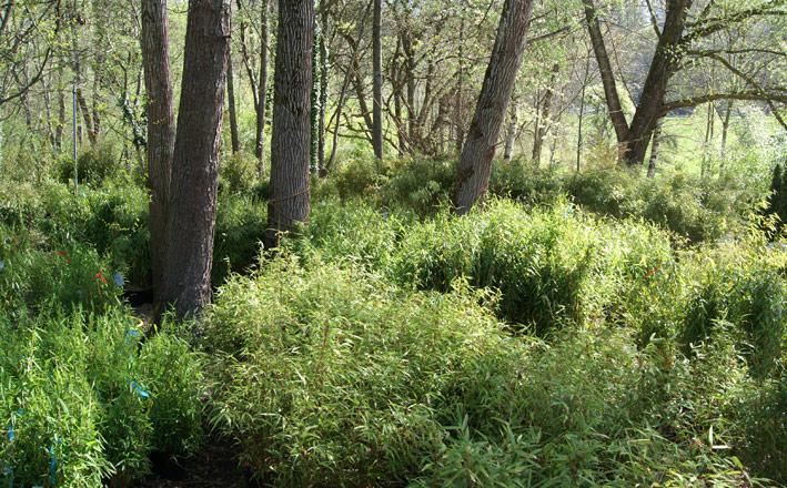 bambus-im-bambuswald-2