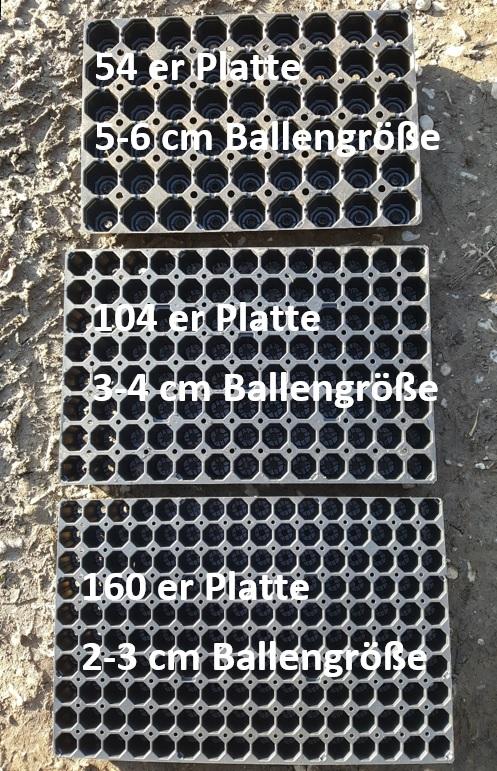 Plattengr-ssen