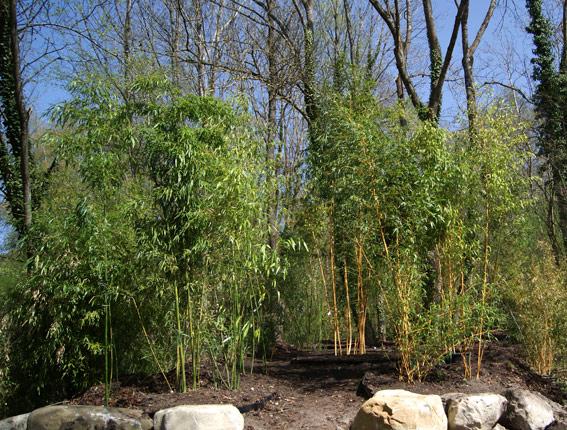 bambuspark-grosse-pflanzen-bei-bambuswald