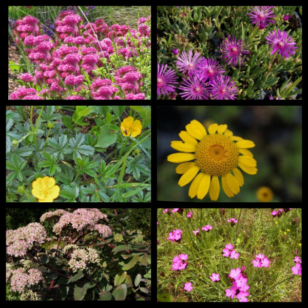 Sortiment Blühendes Wunder