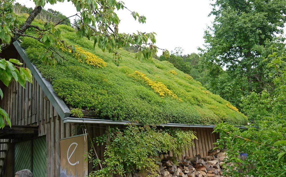 Pflanzen Für Die Dachbegrünung | Dachbegrünung Information ... Pflanzen Fur Dachbegrunung Dachgarten