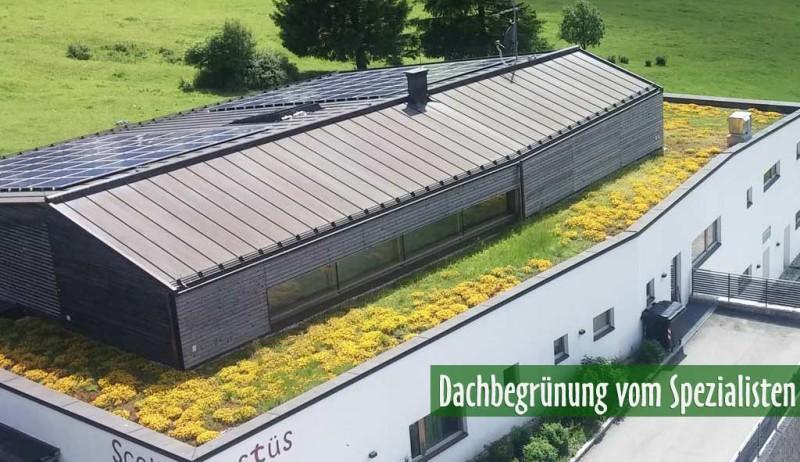 dachgarten24 pflanzenshop f r ihr gr nes dach dachgarten24 pflanzenshop f r ihr gr nes dach. Black Bedroom Furniture Sets. Home Design Ideas