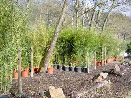 hofstettermuehle-bambusausstellung1
