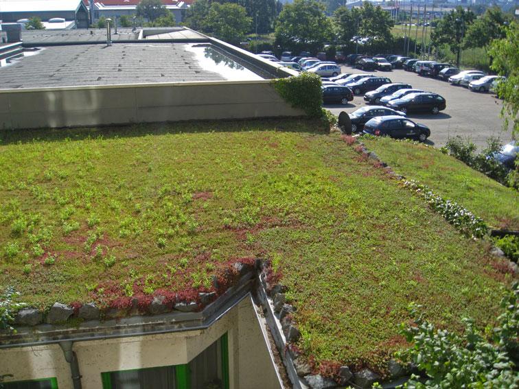 Dachbegrünung - Ein schönes Gründach für das Klima